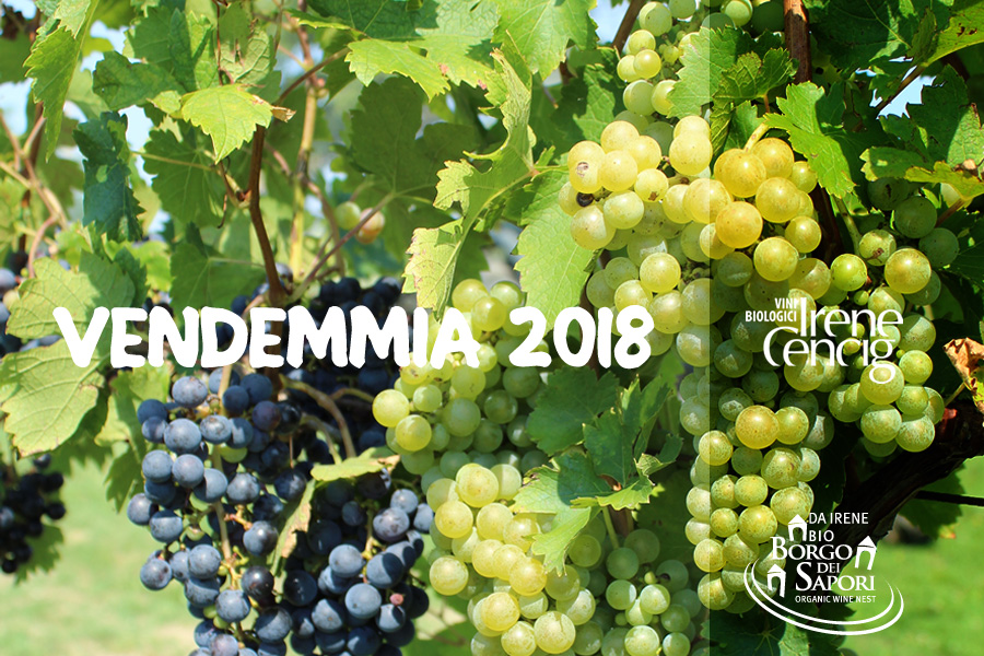 open video vendemmia